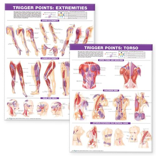 Trigger Points Chart Set - One of our most popular Trigger Point Chart Sets
